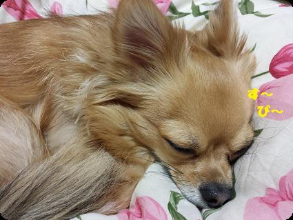 眠いチョロ太4