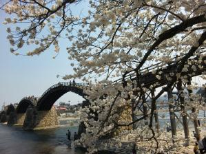 岩国 錦帯橋と桜/Iwakuni Kintaikyo bridge and cherry blossom