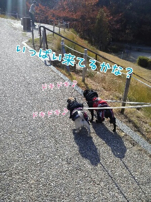 fc2_2013-11-29_18-03-47-394.jpg