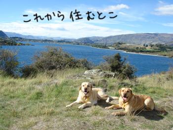 羊の国のラブラドール絵日記、犬連れ引っ越しプロジェクト6