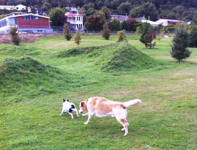 羊の国のラブラドール絵日記、写真日記Picton1