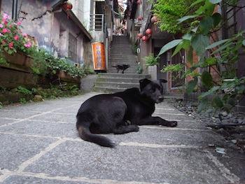 羊の国のラブラドール絵日記、台湾写真5