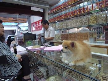 羊の国のラブラドール絵日記、台湾写真8