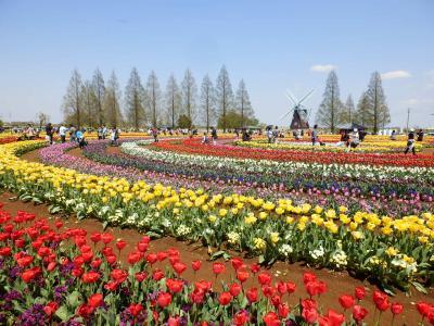 あけぼの山農業公園10