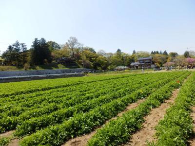 あけぼの山農業公園11