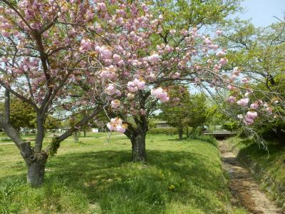 奈良市郊外サイクリング19