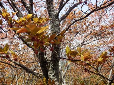 奈良・吉野の散策32
