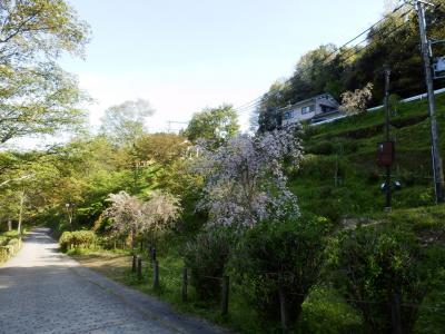 奈良・吉野の散策104
