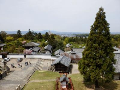 奈良公園9