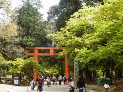 奈良公園13
