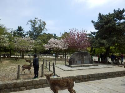 奈良公園25