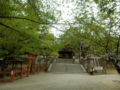 奈良公園34