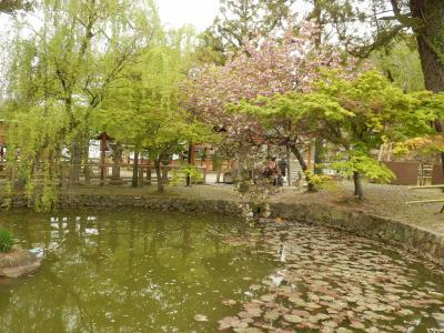 奈良公園35