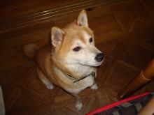 ヒラおんちゃんのブログ