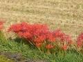 2014秋の花