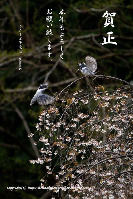春とヤマセミ
