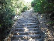 鉢伏山への階段2