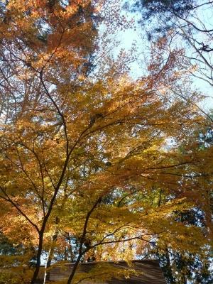 石神井公園2013年晩秋