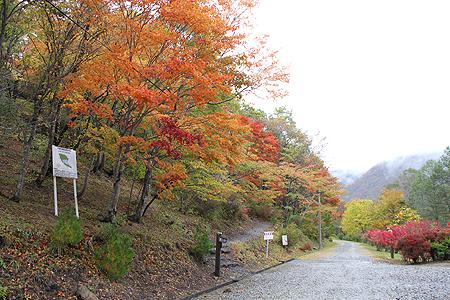 観音沼森林公園 10 15 002