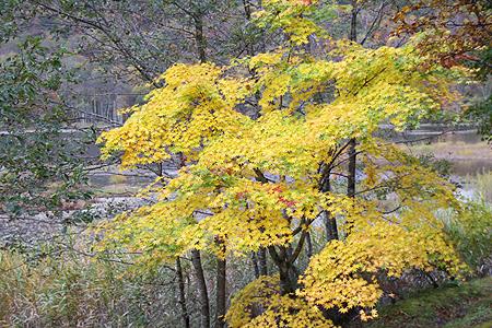観音沼森林公園 10 15 007