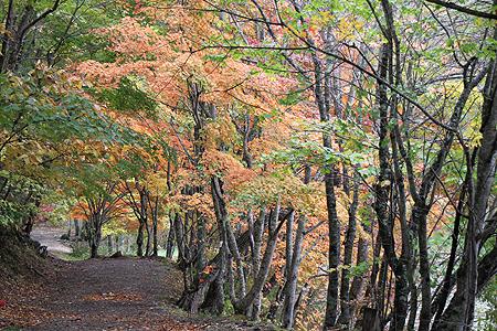 観音沼森林公園 10 15 015