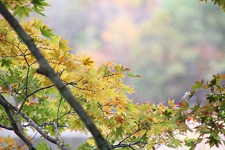 観音沼森林公園 10 15 014