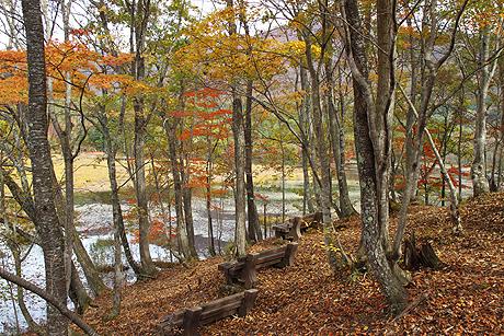 観音沼森林公園の紅葉1021 001