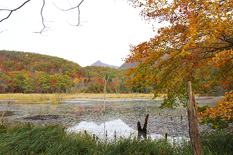 観音沼森林公園の紅葉1021 003