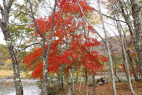 観音沼森林公園の紅葉1021 004