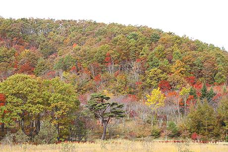 観音沼森林公園の紅葉1021 005