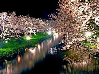 s-玉造温泉 夜桜2