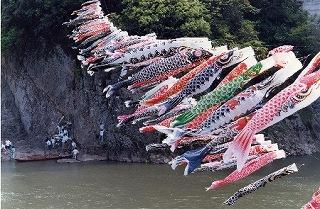 s-江の川 鯉