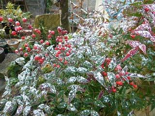雪化粧の裏庭