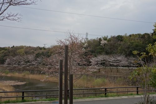 風景-20130323-5