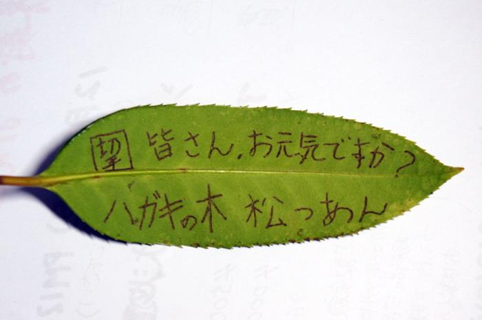 DSC06038.jpg