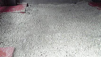 セメント撒き後7・6 d