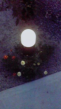 庭 人感センサー点灯