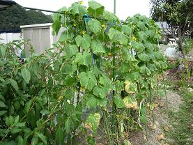 秋冬野菜 003