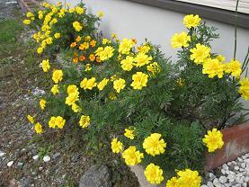 今日の花 022
