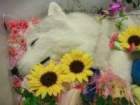 momoka_july23 (9)