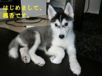 fuka_2011,08,15 (44-2)