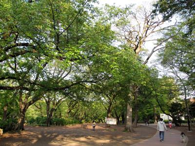 緑の井の頭公園