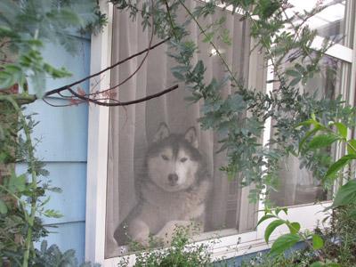 窓辺のポトフ
