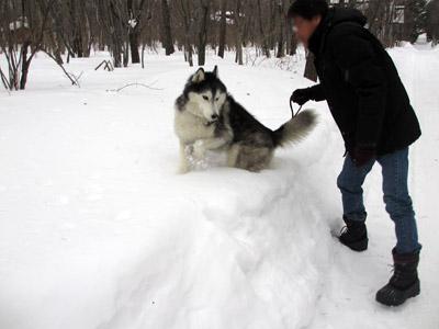 すんごい雪