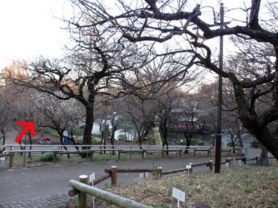 日曜日の井の頭公園