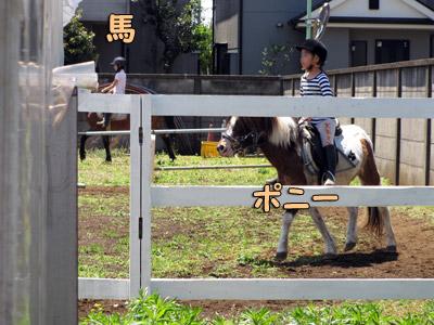 出張乗馬教室