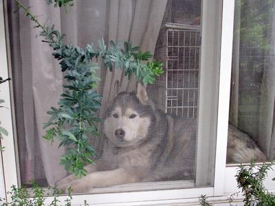 窓辺のトリュフ