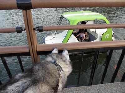 ボートの観察