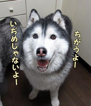 ポっちゃん