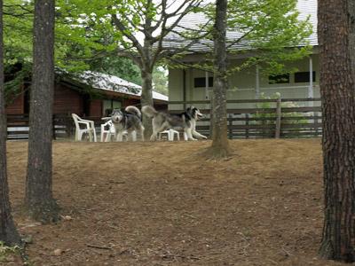 丘の公園ドッグラン